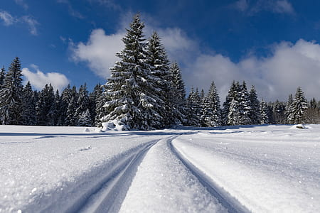 photo of snow covered land and pine trees