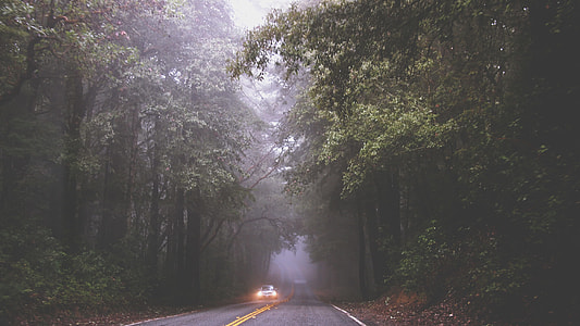 photo of white car ride on forest
