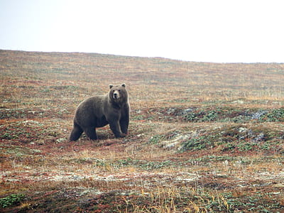 black bear on grassland