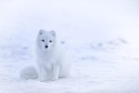 white fur animal standing sitting on snow