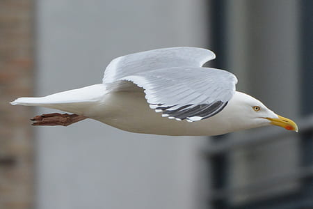 macro shot photography of white seagull