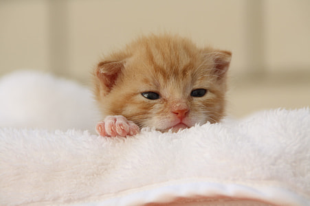 photography of kitten