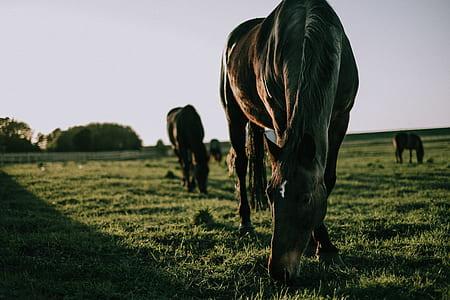 horse eating grass on grass field