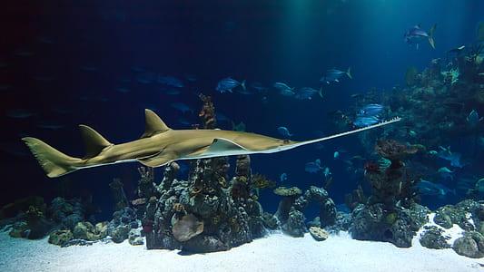 gray stingray underwater