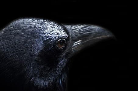 shallow focus of hawk