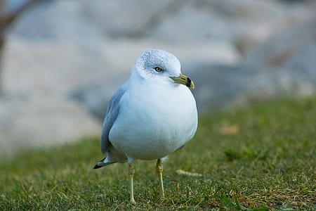 White Bird on Green Grass