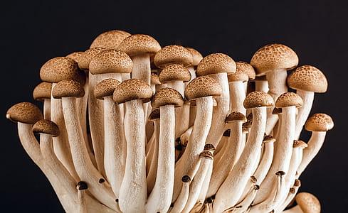 bunch of mushroom
