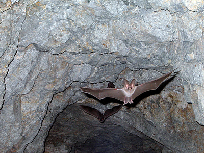 brown bat near gray cave