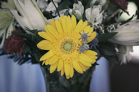 depth of field photography of yellow daisy in vase