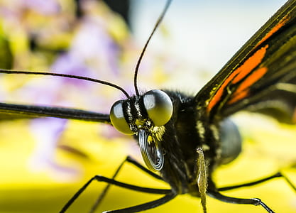 macro photography of black butterfly
