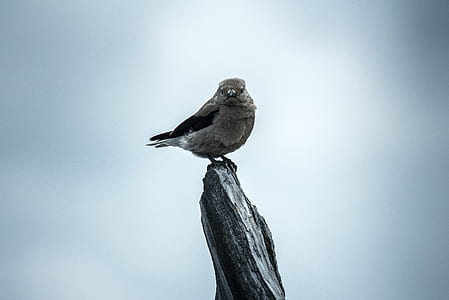 gray bird perch on gray stone