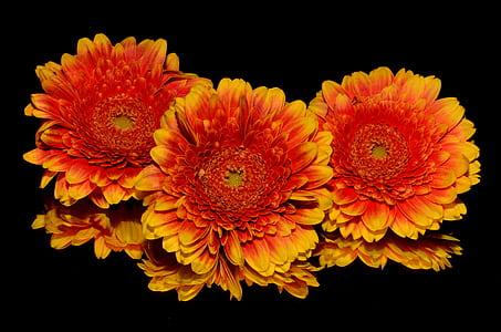three yellow and orange flowers