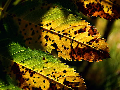 selective focus photography of green-and-yellow leaves