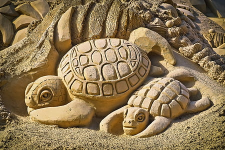photo of Turtle sand carving