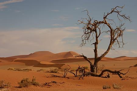 bare tree on desert field