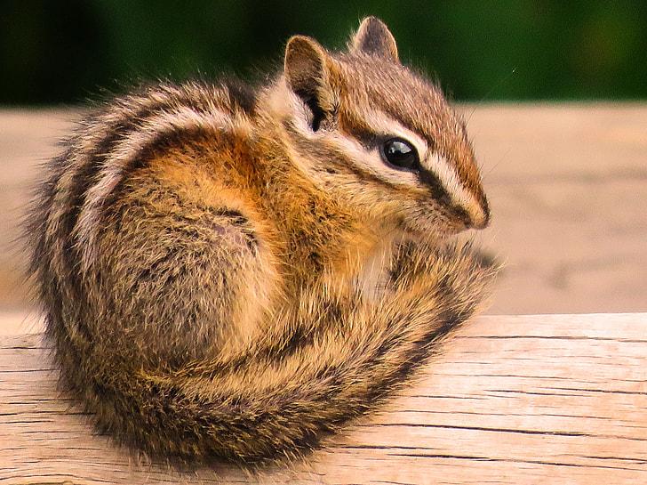 brown squirrel sitting on brown log