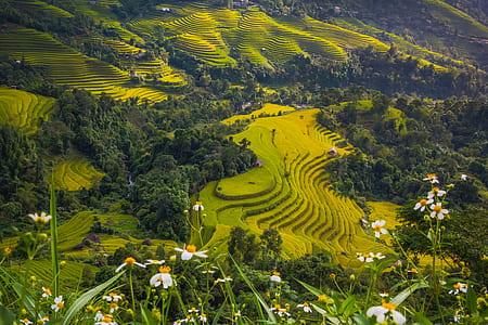 Banaue, Rice Terraces
