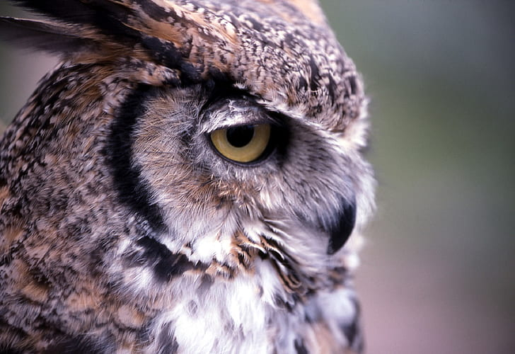 closeup photography of brown and gray owl