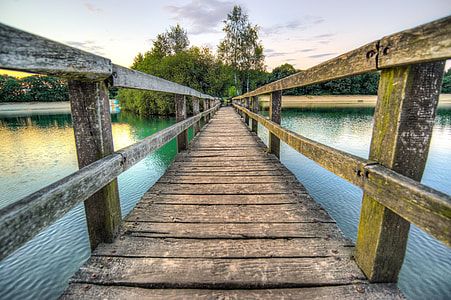 brown wooden dock in front of green trees