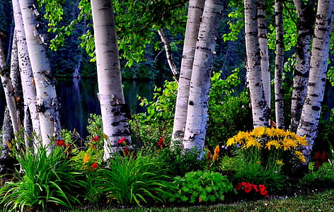 landscape photography of flowers and trees
