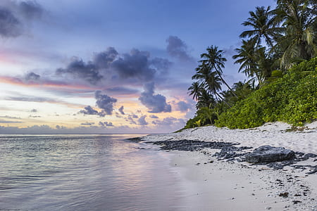 white seashore photo