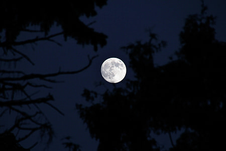 full moon over trees during nighttime