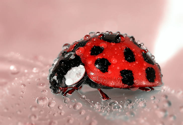 shallow focus photography red and black ladybug