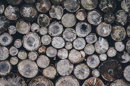 closeup photography of pile of logs
