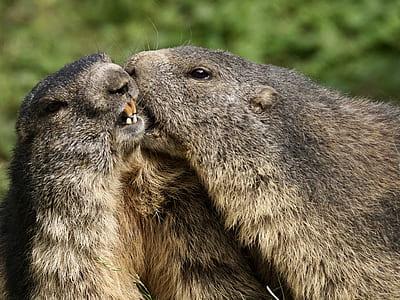 two beavers photo
