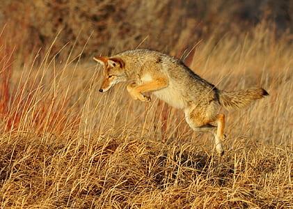 gray jumping fox at daytime