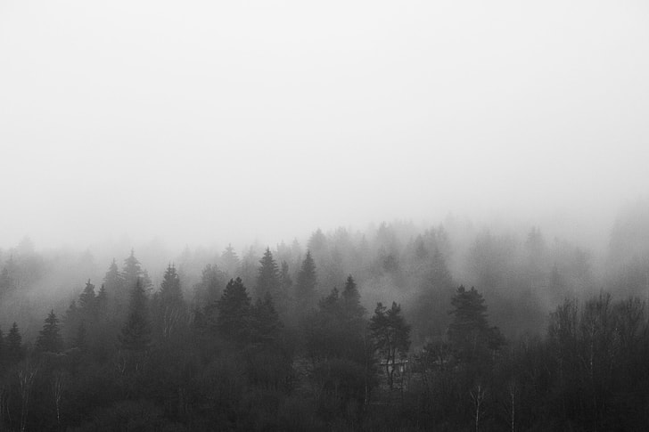 Black and White Morning Foggy Forest