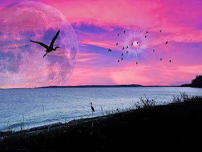 bird on ocean