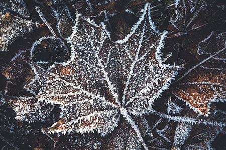 Winter tree leaf from forest with ice and snow