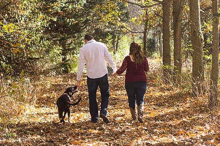 man and woman with adult black Labrador retriever walking between green leaf tree during daytime