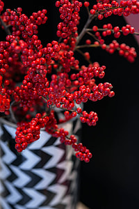Red rowan in a black-and-white pot