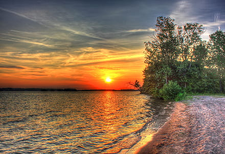 green leafed trees near body of water during sunset