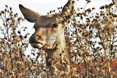 shallow photography of brown giraffe