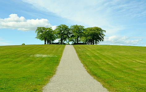 pathway straight to trees