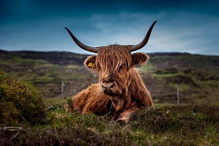 brown yax