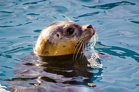 black and brown sea lion on water