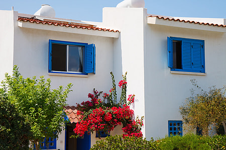 red bougainvillea flowers on white and blue concrete house