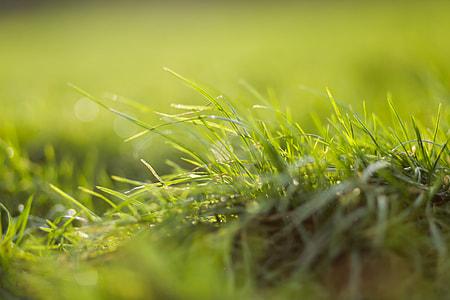 Closeup Grass Sun