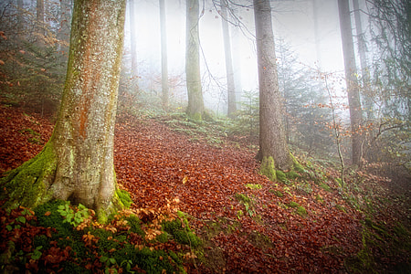 green-leafed plants beside tree surrounded by fog
