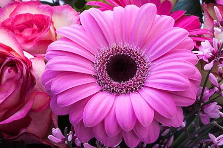 pink gerbera flower selective focus photography
