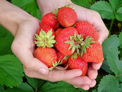 hand full of strawberry