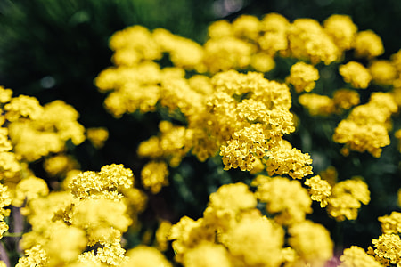Small yellow flowers