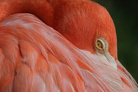 pink and gray bird