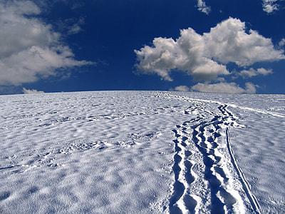 tracks on white snow