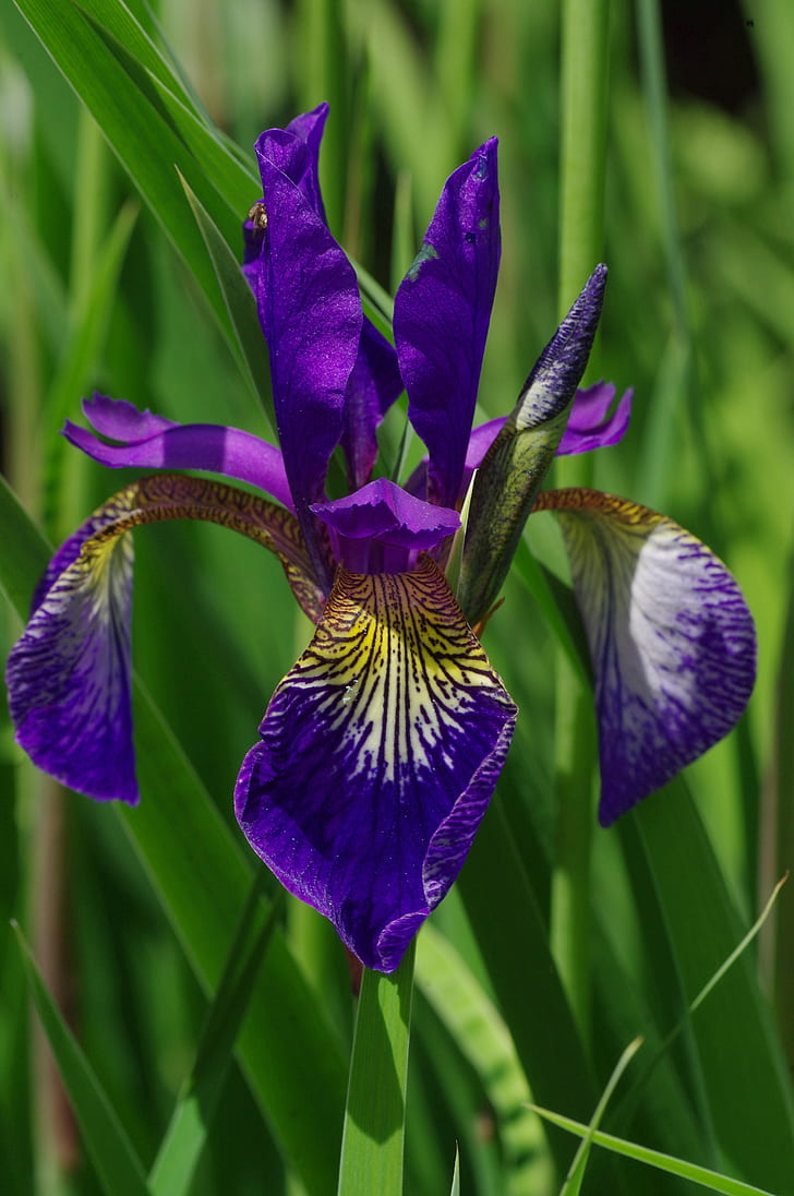 Royalty Free Photo Purple And Yellow Orchid Flower Pickpik