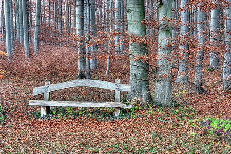 brown wooden bench near tree